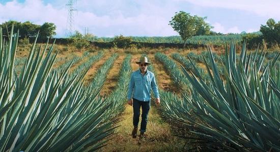 Tequila de Guanajuato presente en la segunda temporada de Destilando México